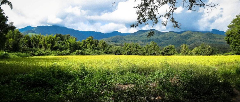 Green Season Mekong Cruises